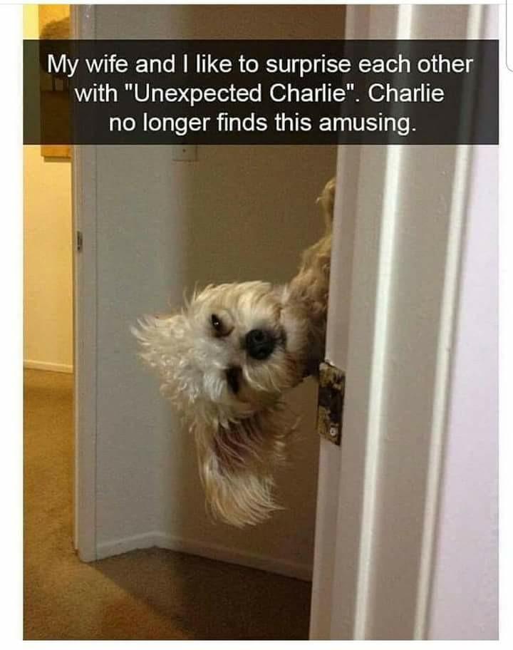 That dog is like 1000% done - meme