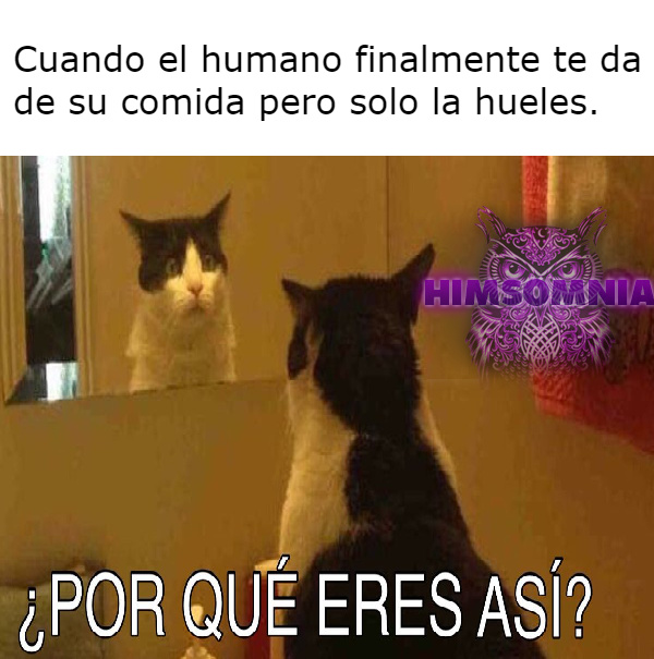 58a3d02045371 lof a los gatos meme by derpi222 ) memedroid