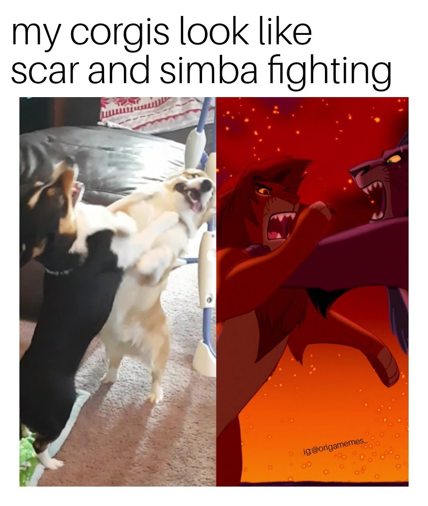 Majestic doggo fight