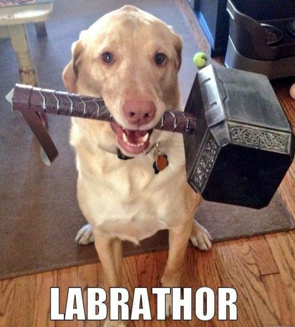 Labrathor - meme