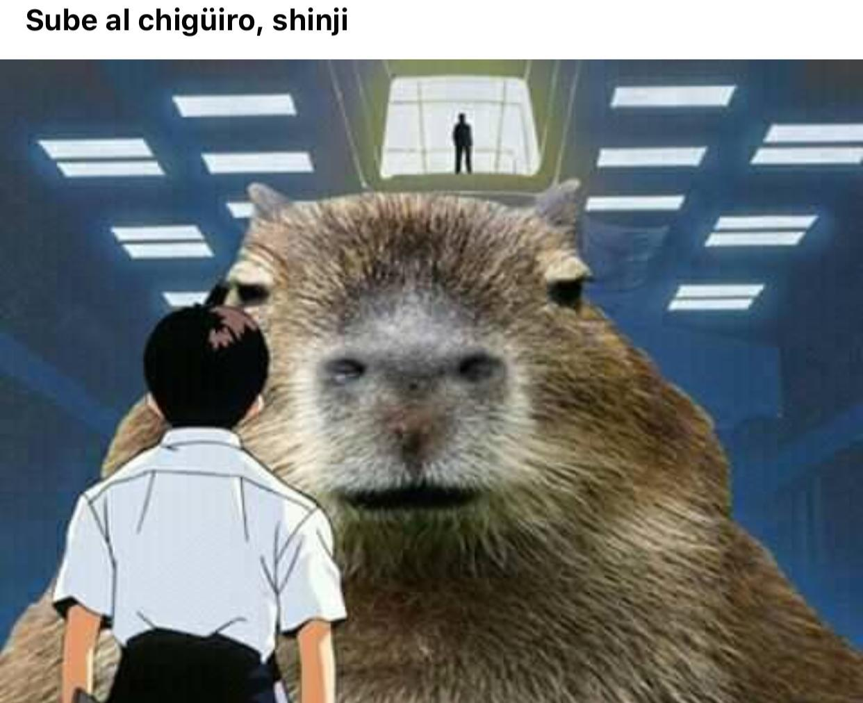 Sube shinji - meme