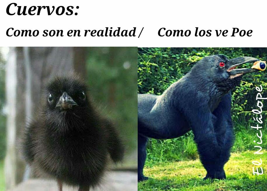 El cuervo de Poe - meme