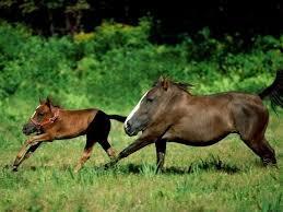 Horses without necks - meme