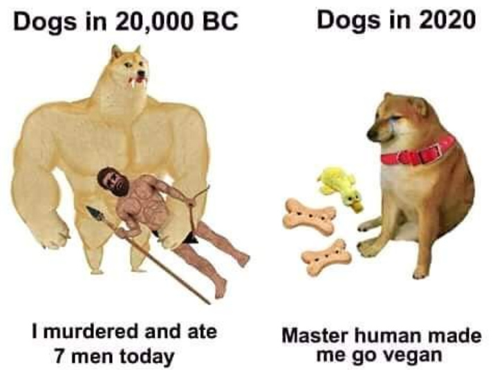 dongs in a dog - meme