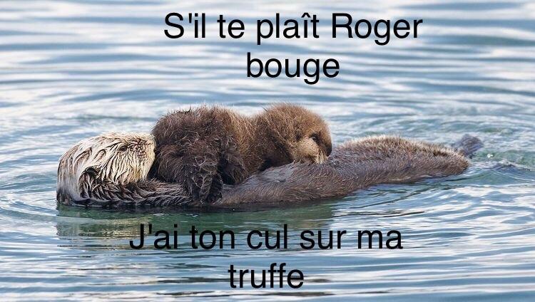 stp Roger - meme