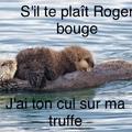 stp Roger