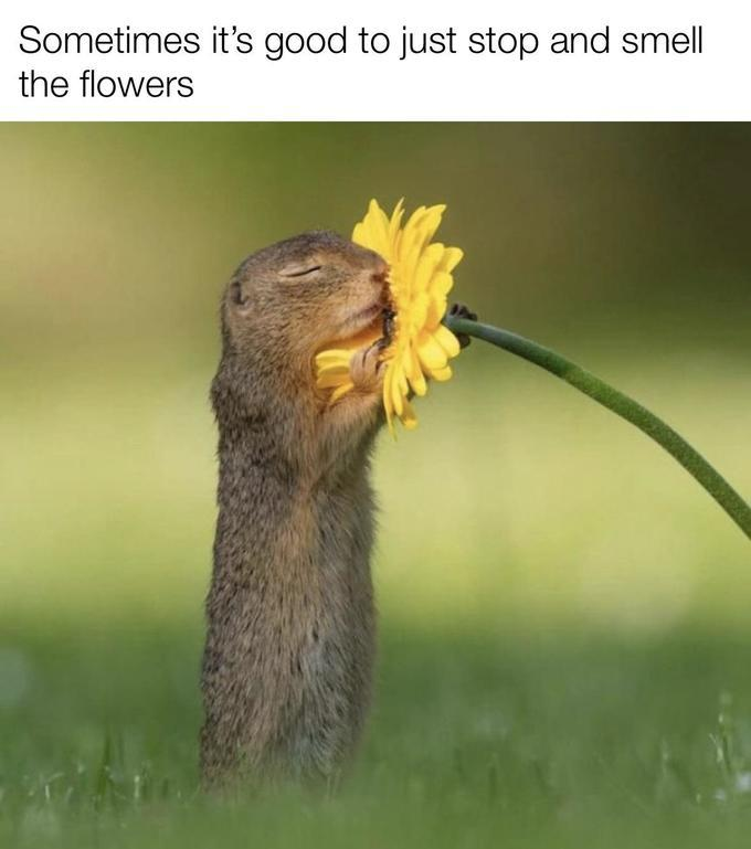[Ea]sy, breezy, beau[t]iful, cover [squirrel]. - meme