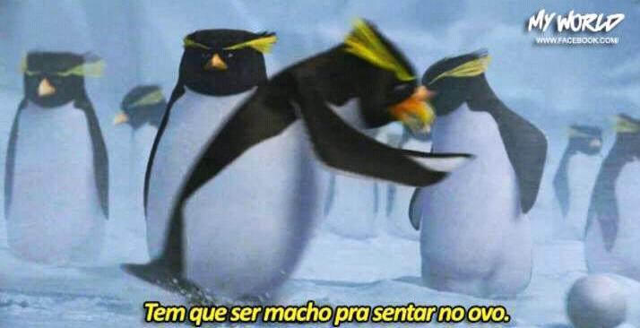 Macho d+++ - meme