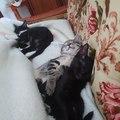 kitteys for your tired soul