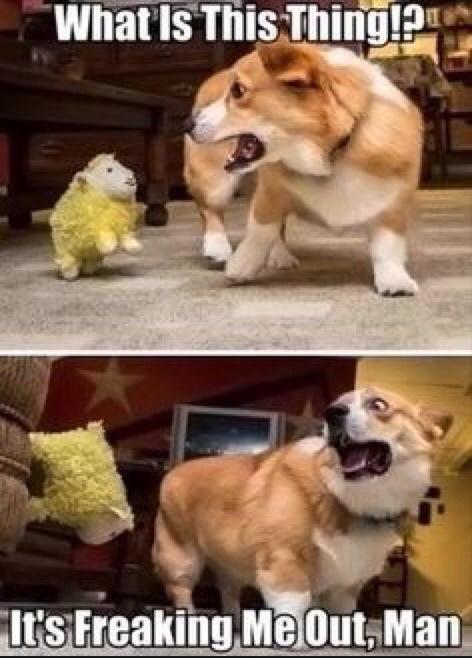 scared doggo - meme