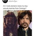 My dog looks like Tyrion Lannister