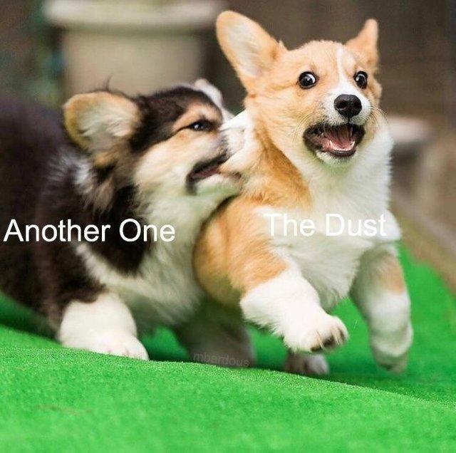 DUH DUH DUH - meme