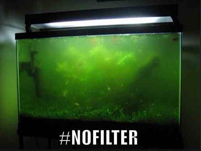 No filter - meme