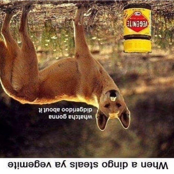 'straya special - meme