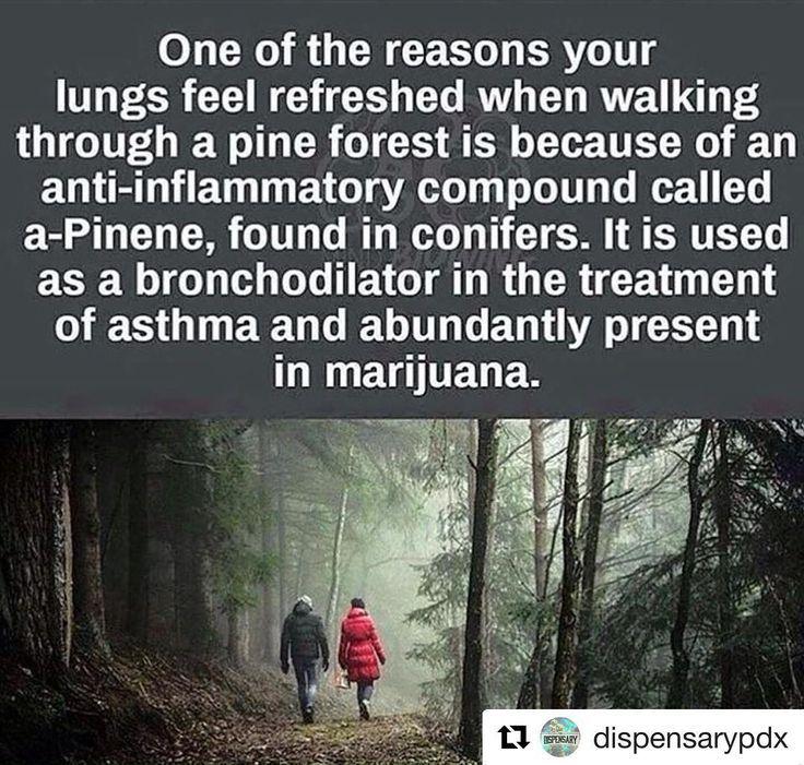 good pines - meme