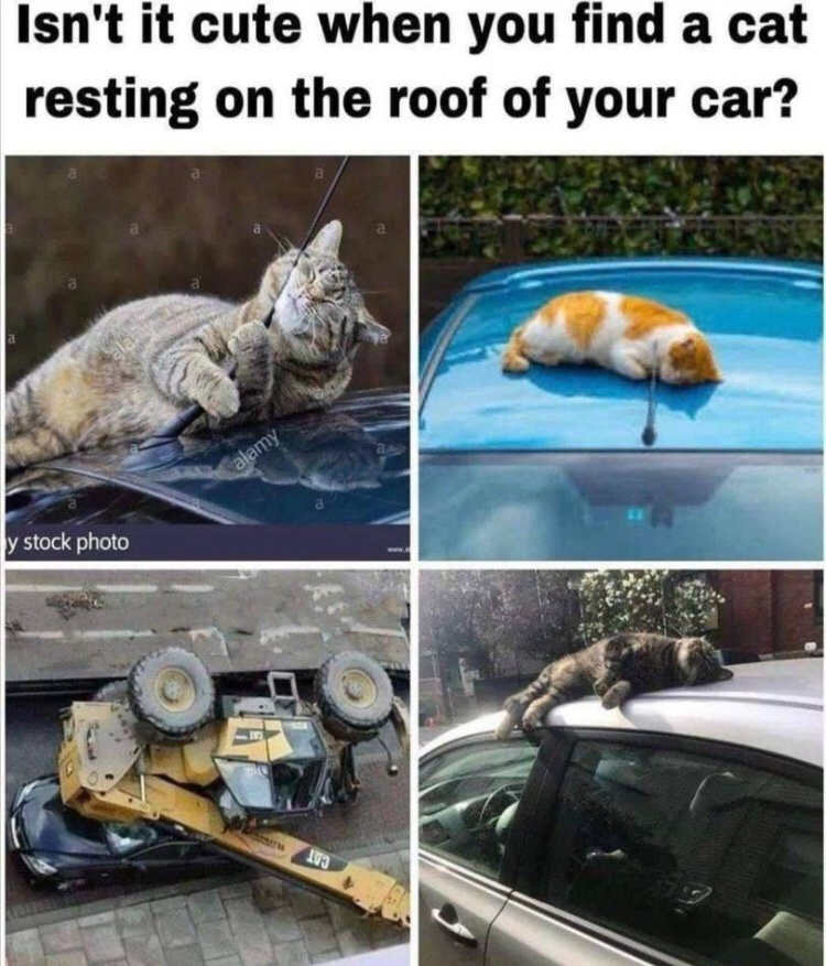 Goddamn you cat - meme