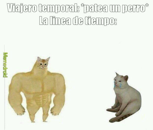 Cheems gato - meme