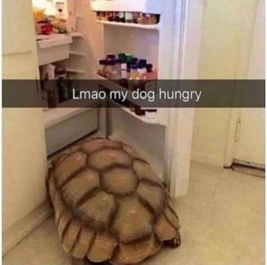 my dog hungry - meme