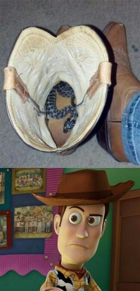 Ders an snake in me boot - meme