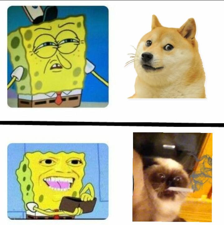 Ricordate, comprate animali che di nascosto si drogano!!! - meme