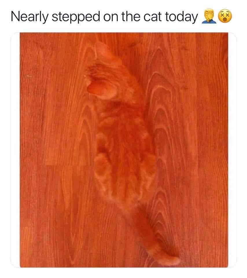 Fuck cats - meme