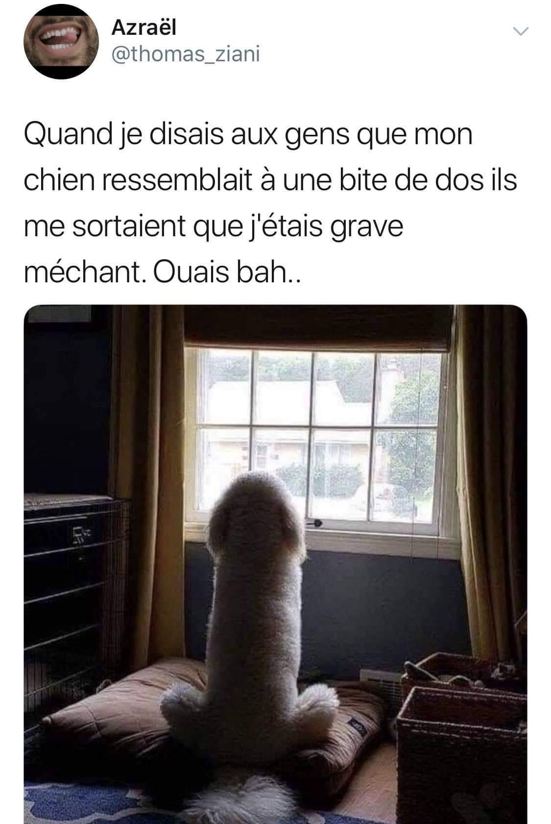 Chien > Chat mais Chat trop mignon - meme