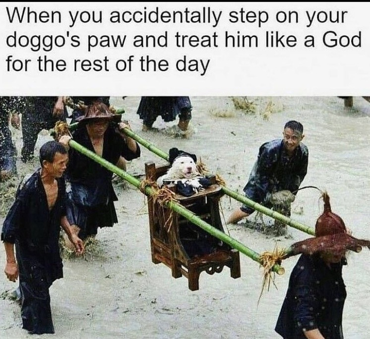 praise doggo - meme