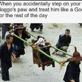 praise doggo