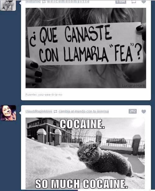 Catt - meme