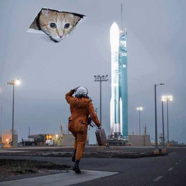 kitty overlord - meme