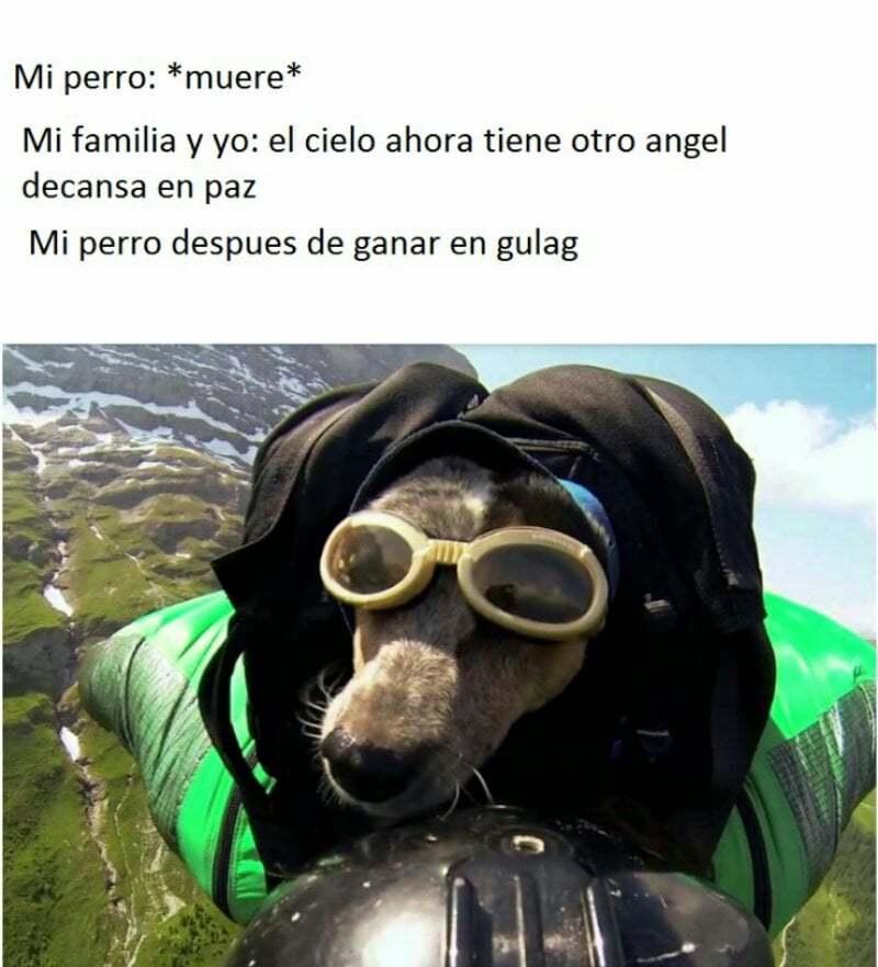 perro v3rg4s - meme