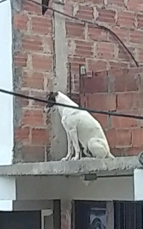 Perro en el techo - meme