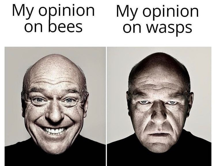 fuck wasps and hornets - meme