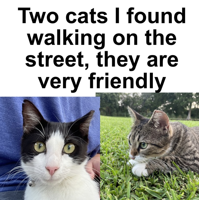 Two cats to protect you from shitposting on august 1st - meme