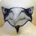 Face reveal (asi es soy un pájaro)