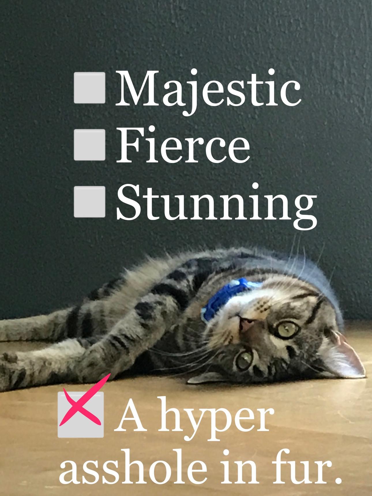Hyper Cat - meme