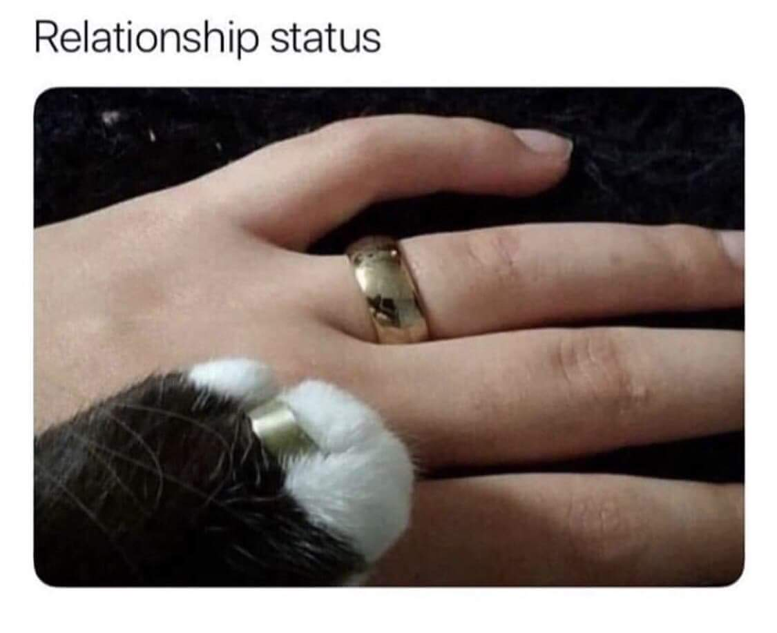 Marriedtomycat - meme