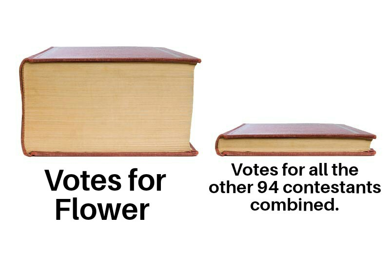 VOTE FOR FLOWER @ tiny.cc/vote for flower - meme