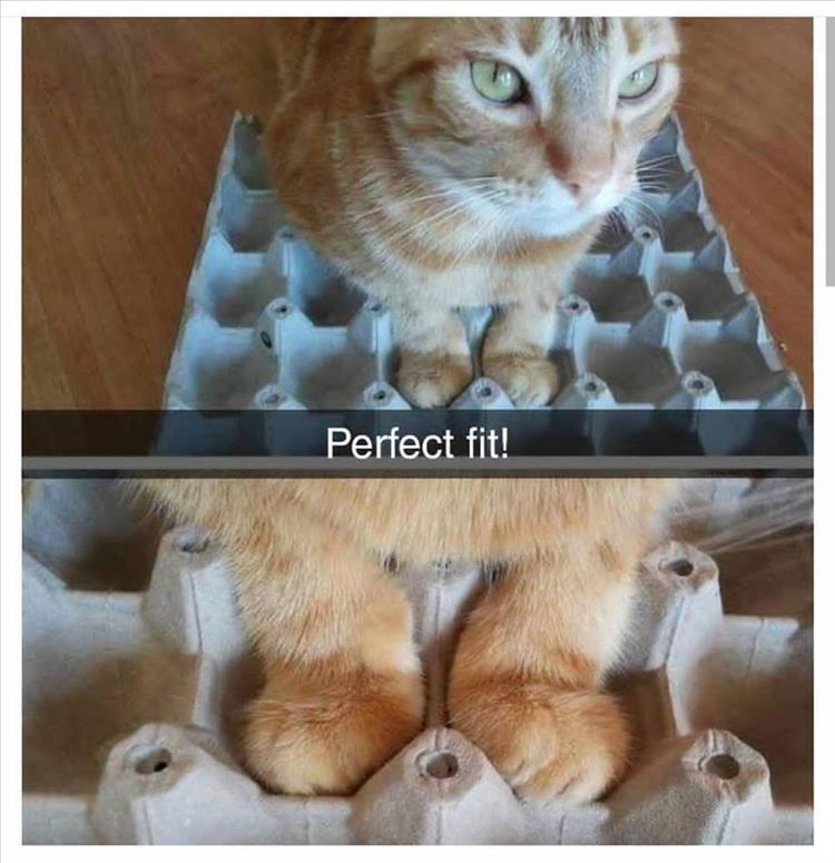 Cate+egg box= Perfect fit! - meme