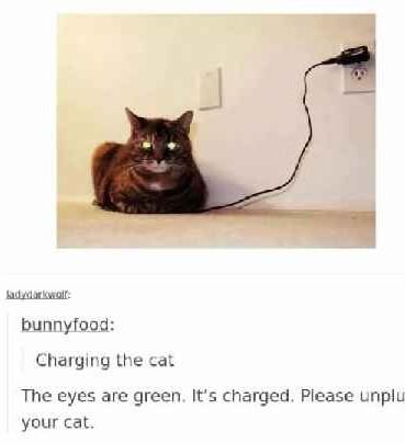 Kitten cat - meme