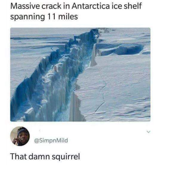 That damn squirrel - meme