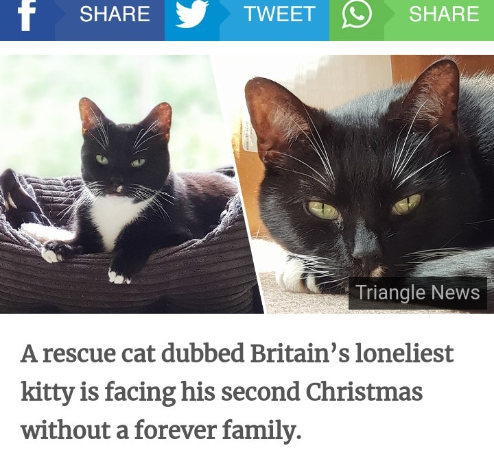 Someone give this poor Kitty a home - meme