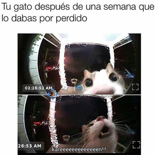 Jajaxdd - meme