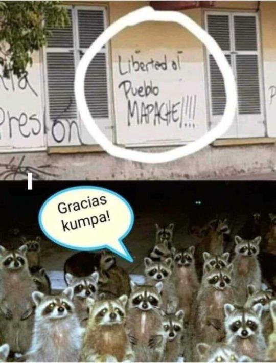 AGUANTE EL PUEBLO MAPACHE - meme