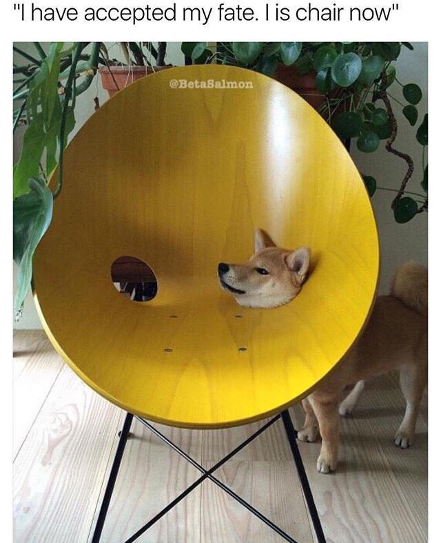 Doge's fate - meme