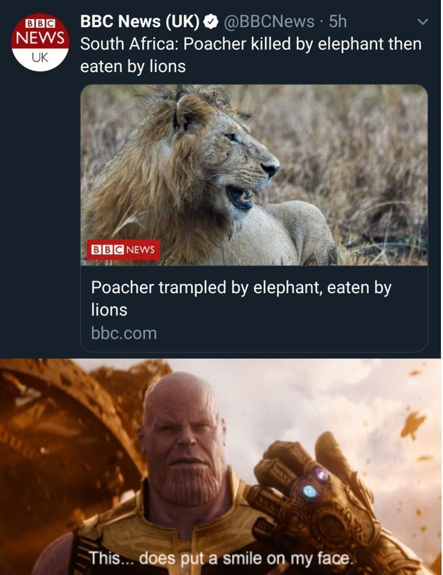 Poeacher killed by elephant then eaten by lions - meme