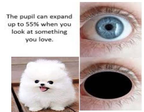 doggo cute - meme