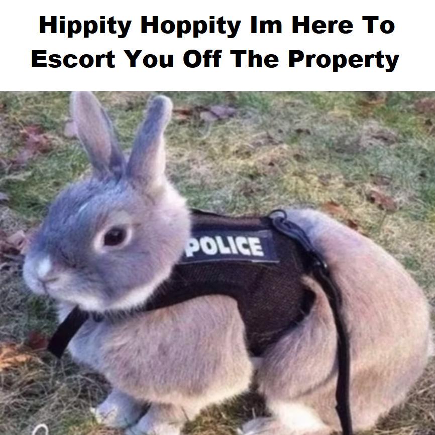 Hippity Hoppity - meme