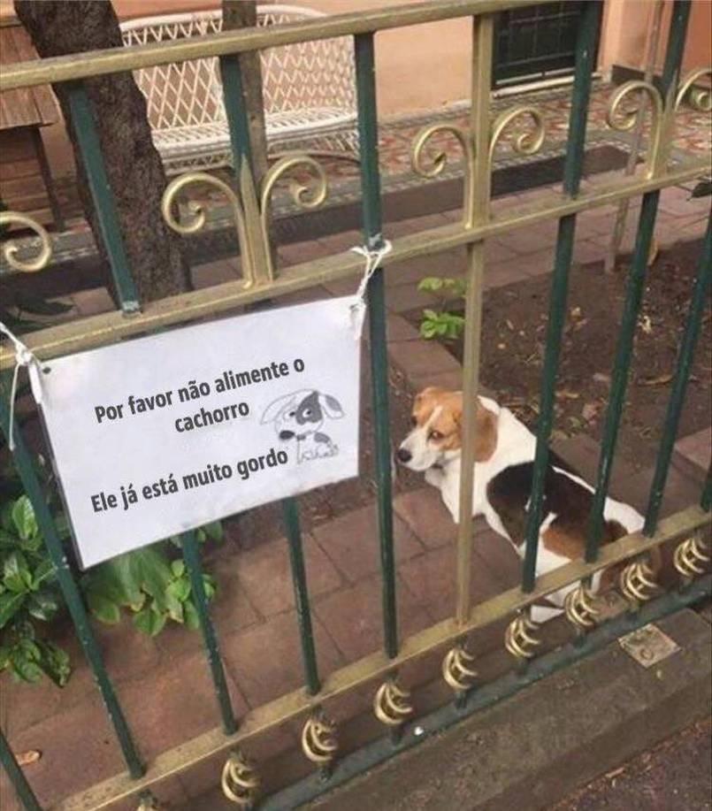 o Título foi alimentar o dog - meme