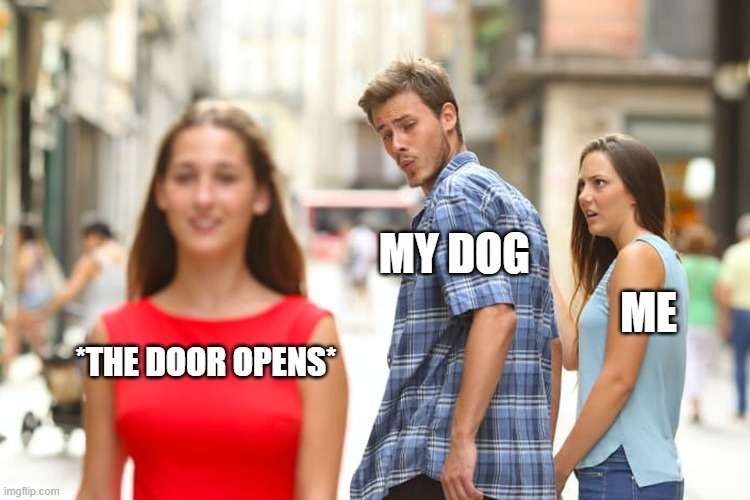 Doge+*door opens = run - meme